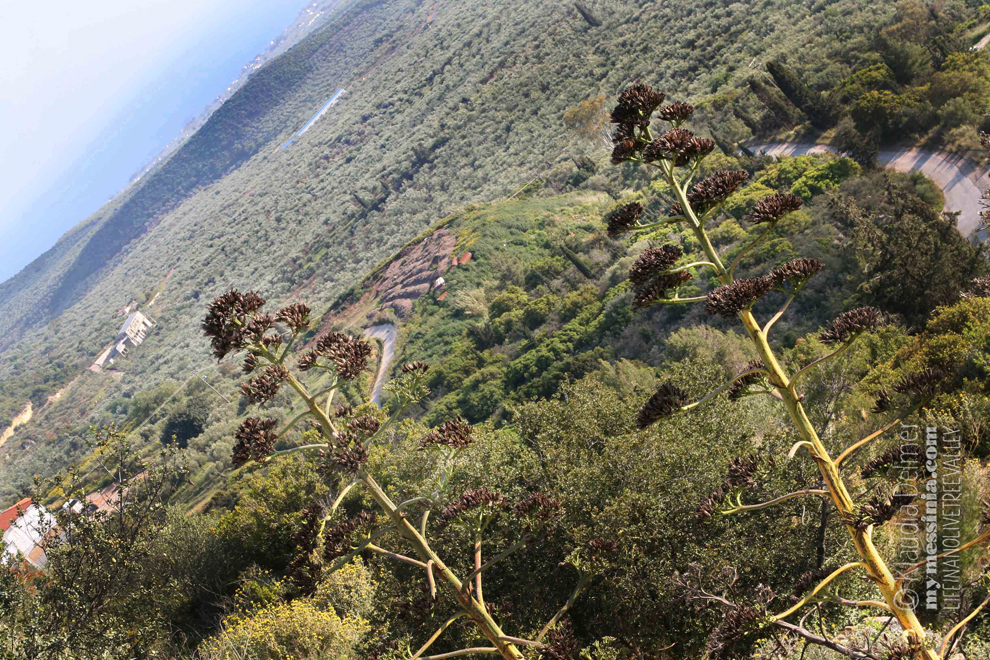 View on a part of the olive tree valley from the town of Gargalianoi