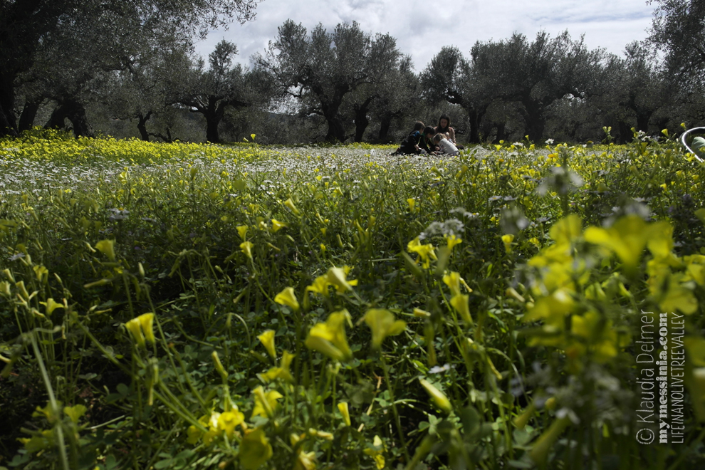 Picnic among olive trees and sorrel flowers