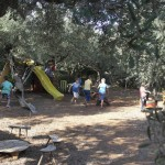 Growing up with olive trees-Natural playgrounds
