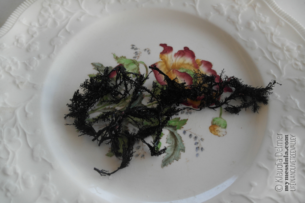Sea weeds used for tinting eggs