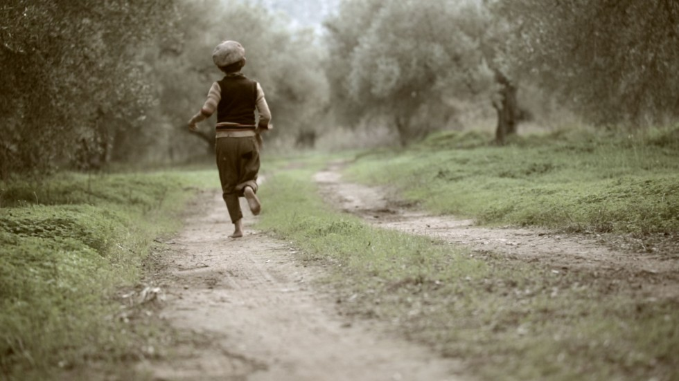 the olive tree will always be here