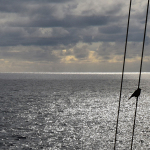 Ephemeris XXVII-Starling on a cable and the waves